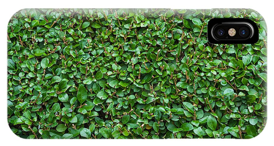 Freshness IPhone X Case featuring the photograph Close-up Privet Hedge by Chay Bewley