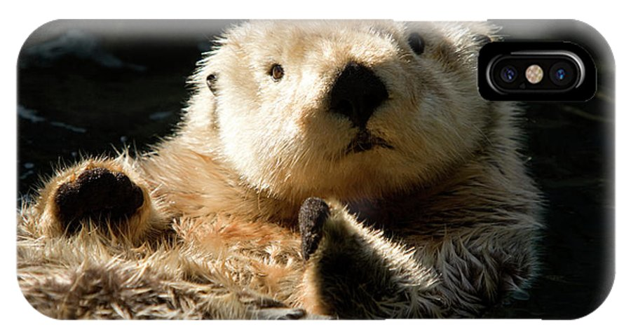 Cute Photographs IPhone X Case featuring the photograph Closeup Of A Captive Sea Otter Making by Tim Laman