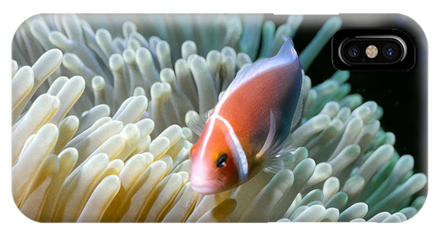 Micronesia IPhone X Case featuring the photograph Clownfish 9 by Dawn Eshelman