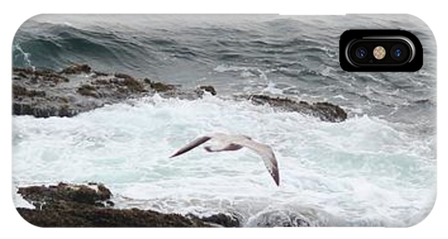 Seagull IPhone X Case featuring the photograph Coastal Maine 10 by Susan Feeley