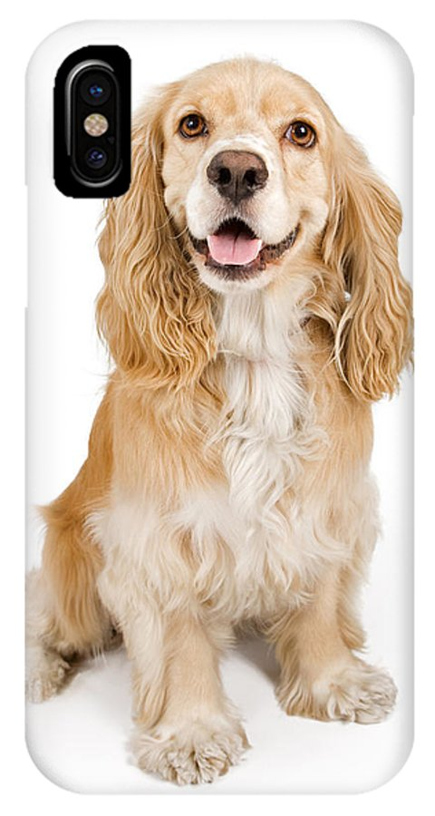 Dog IPhone X Case featuring the photograph Cocker Spaniel Dog Isolated On White by Susan Schmitz