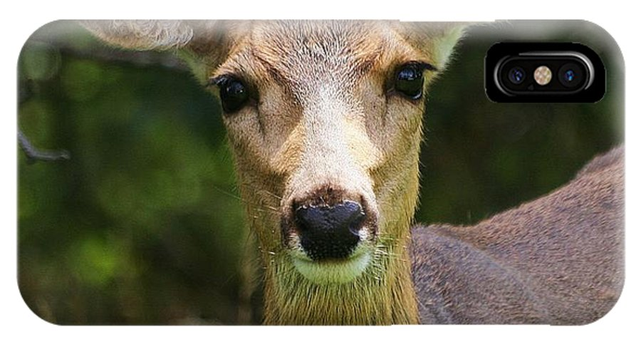 Animal IPhone X Case featuring the photograph Colorado Deer by Ronnie Glover