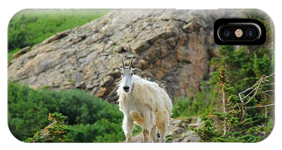 Colorado IPhone X Case featuring the photograph Colorado Mountain Goat by Danielle Marie