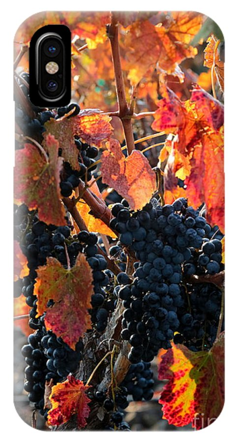 Autumn Harvest IPhone X Case featuring the photograph Colorful Autumn Grapes by Carol Groenen
