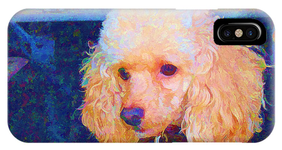 Toy Poodle IPhone X Case featuring the photograph Colorful Poodle by Barbara McDevitt
