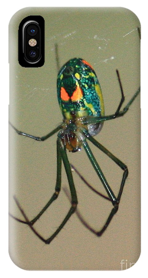 Spider IPhone X Case featuring the photograph Colorful Spider In The Swamp by Carol Groenen