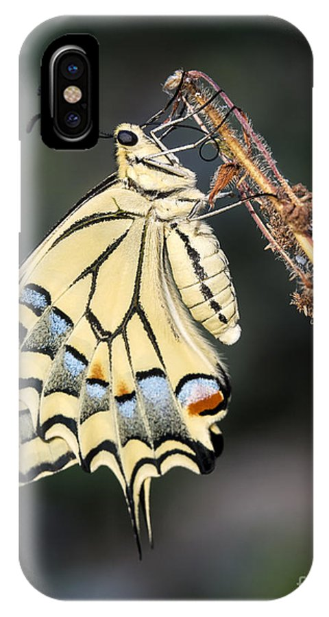 Insect IPhone X Case featuring the photograph Colorfull Profile by Arik Baltinester