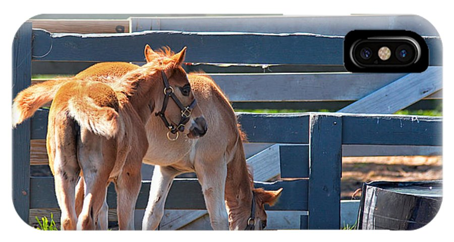 Baby Horses IPhone X Case featuring the photograph Colts At Play by Mary Almond