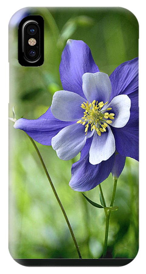 Blossums IPhone X / XS Case featuring the photograph Columbine Card by OLena Art Lena Owens