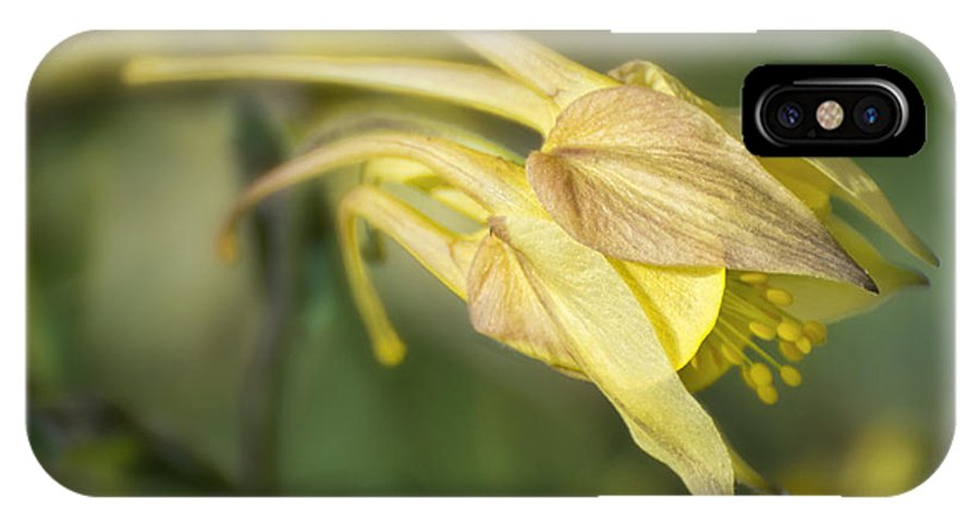 Yellow IPhone X Case featuring the photograph Columbine by Claudia Kuhn