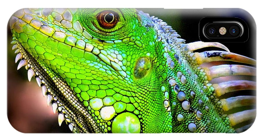 Iguanas IPhone X Case featuring the photograph Come A Little Closer by Karen Wiles
