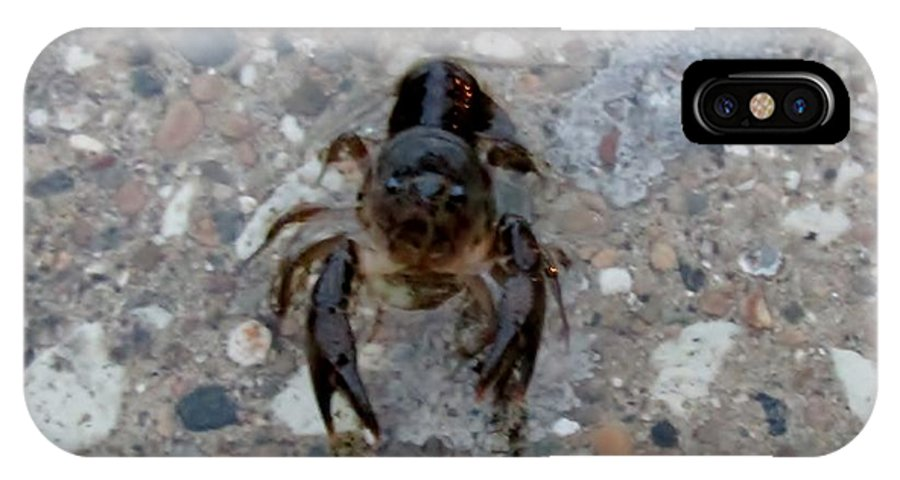 Crayfish IPhone X Case featuring the photograph Hey You Come Here by Don Baker