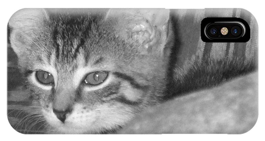 Kitten IPhone X Case featuring the photograph Comfy Kitten by Pharris Art