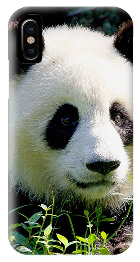 Panda IPhone X Case featuring the photograph Comfy by Travel Photographer