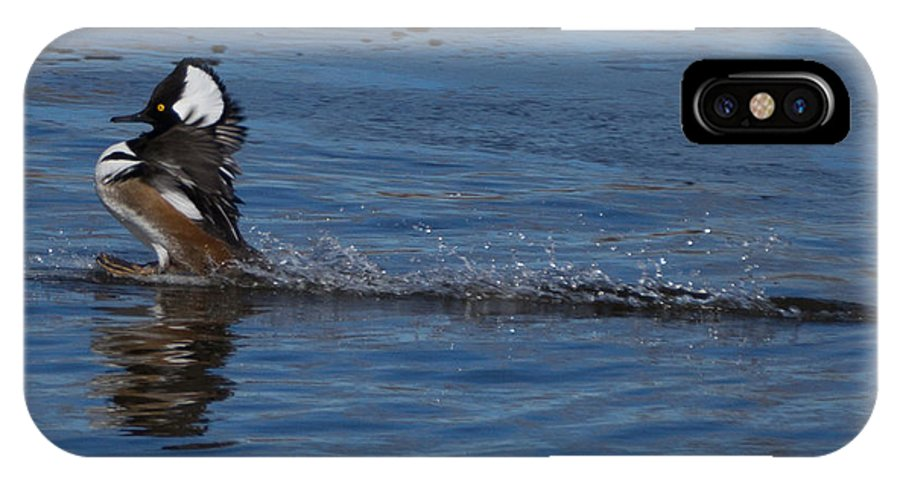Hooded Merganser IPhone X / XS Case featuring the photograph Coming In Too Hot by Ernie Echols