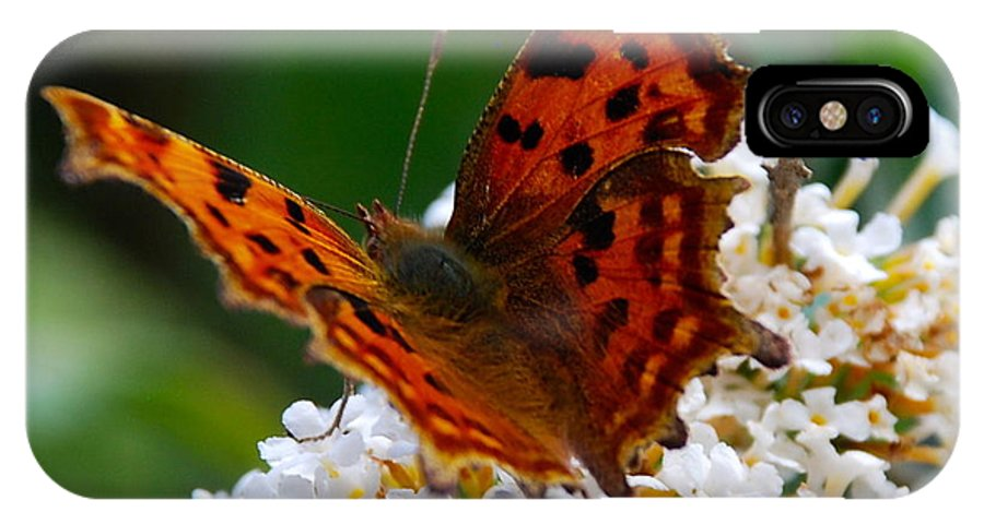Butterfly IPhone X Case featuring the photograph Comma Butterfly by Tom Wade