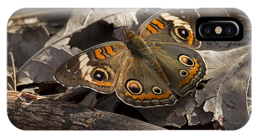 Common Buckeye IPhone X Case featuring the photograph Common Buckeye by Eric Mace