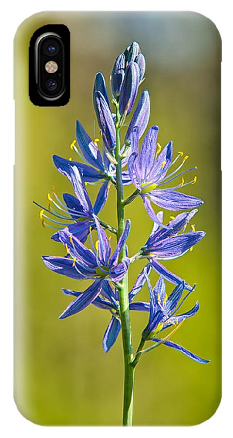 Agavoideae IPhone X Case featuring the photograph Common Camas by Rich Leighton