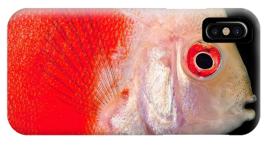 Common Discus IPhone X / XS Case featuring the photograph Common Discus by Dante Fenolio