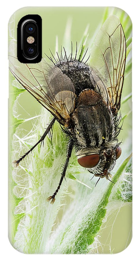 Image Digitally Manipullated IPhone X Case featuring the photograph Common House Fly 0.9x by Javier Torrent