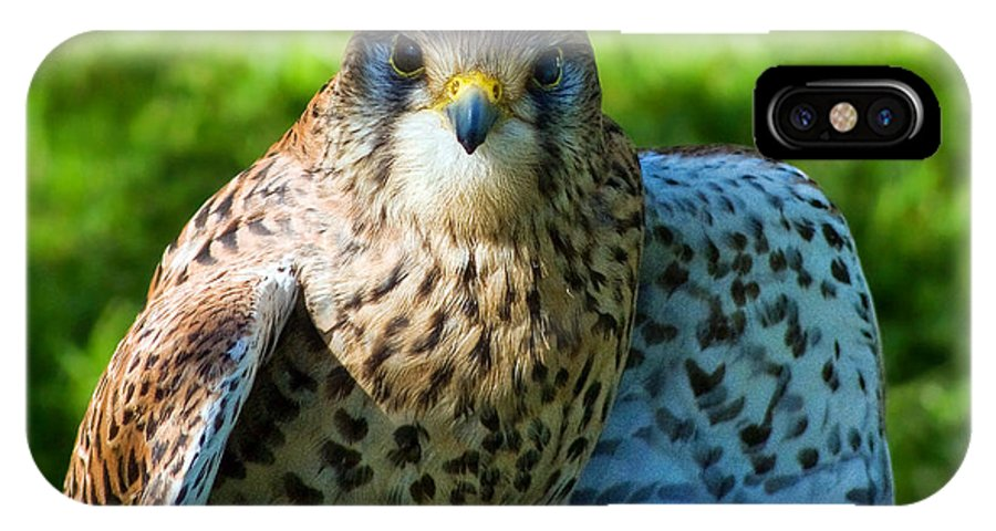 Kestrel IPhone X / XS Case featuring the photograph Common Kestrel by Susie Peek