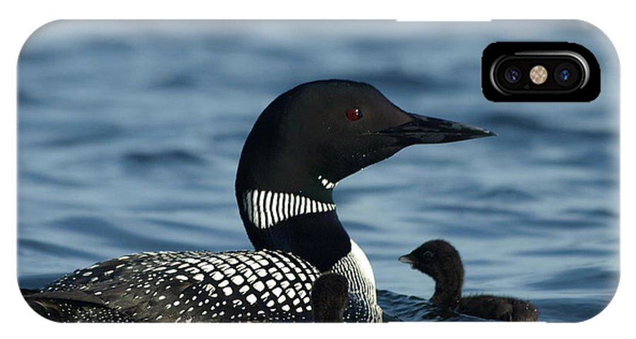 Peterson Nature Photography Common Loon IPhone X Case featuring the photograph Common Loon Family by James Peterson