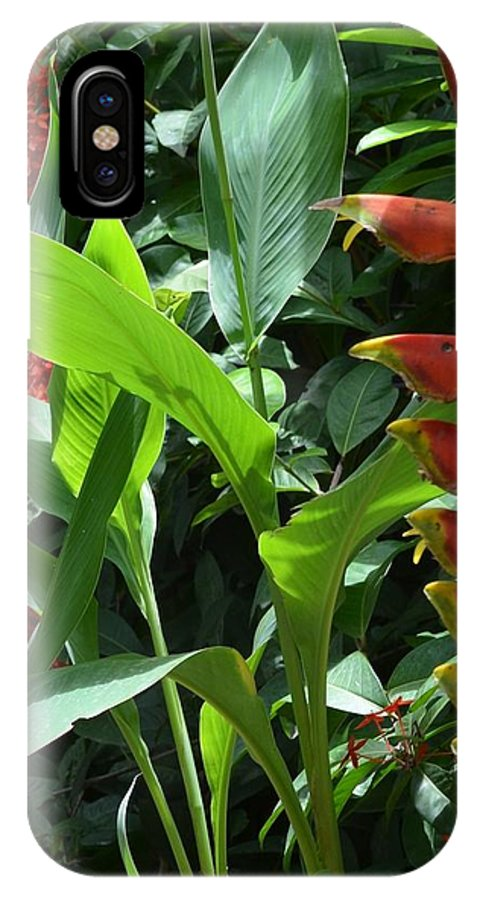 Costa Rica IPhone X Case featuring the photograph Complimentary Contrasts by Sharon Wunder Photography