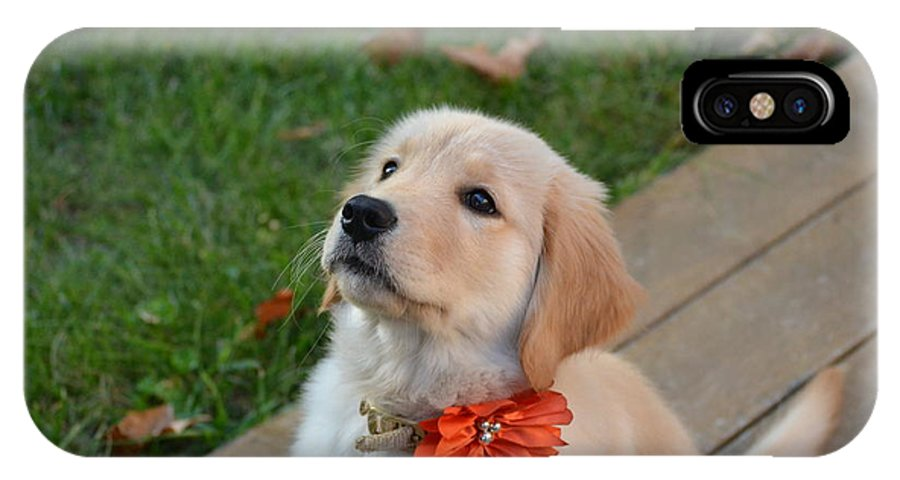 Golden Retriever IPhone X Case featuring the photograph Concentration by Jillian Grap