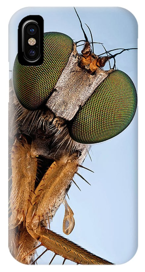 Focus Stacking IPhone X Case featuring the photograph Condylostylus Sp 81 by Javier Torrent - Vwpics