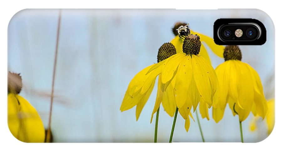 Coneflower IPhone X Case featuring the photograph Coneflower And Bee 2 by Susan McMenamin