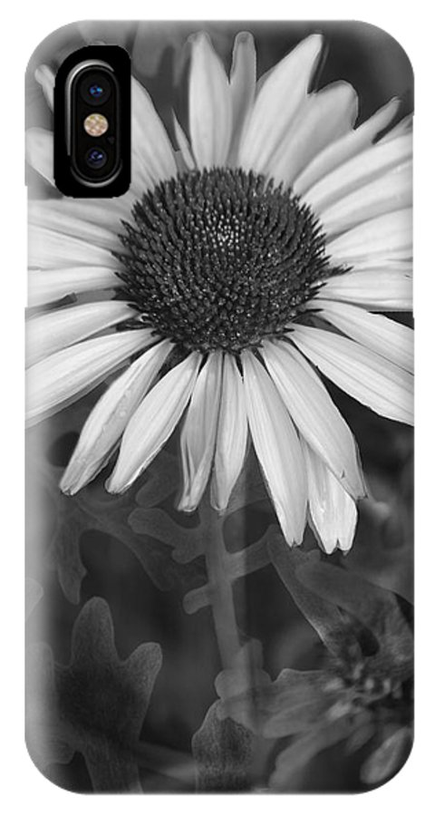 Cone Flower IPhone X Case featuring the photograph Coneflower And Dusty Miller Bw by Lesa Fine