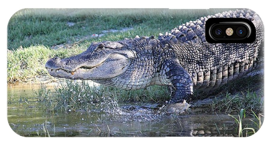 Alligator IPhone X Case featuring the photograph Cooling Off by Cynthia N Couch