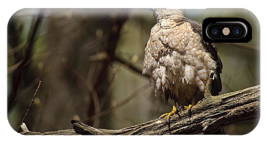 Cooper's Hawk IPhone X / XS Case featuring the photograph Coopers Hawk Pictures 124 by World Wildlife Photography