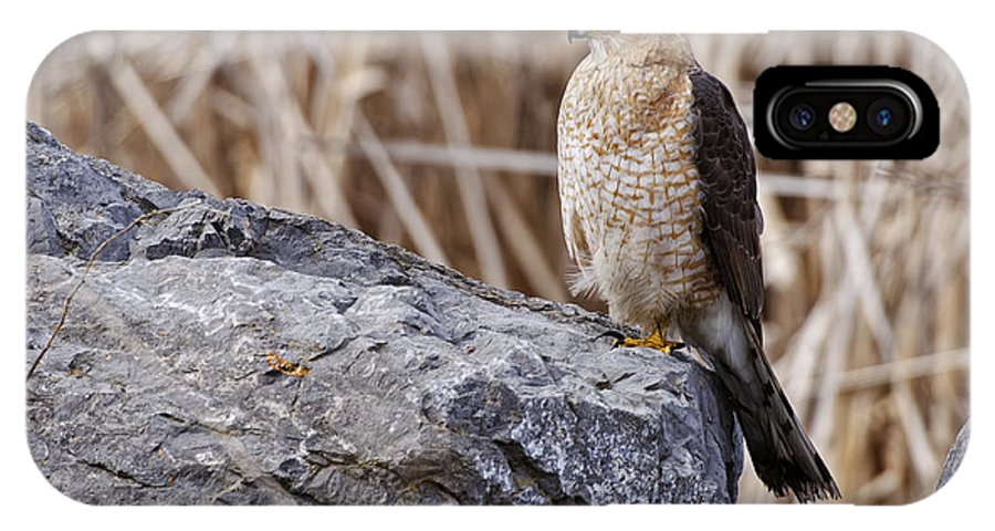 Cooper's Hawk IPhone X / XS Case featuring the photograph Coopers Hawk Pictures 91 by World Wildlife Photography