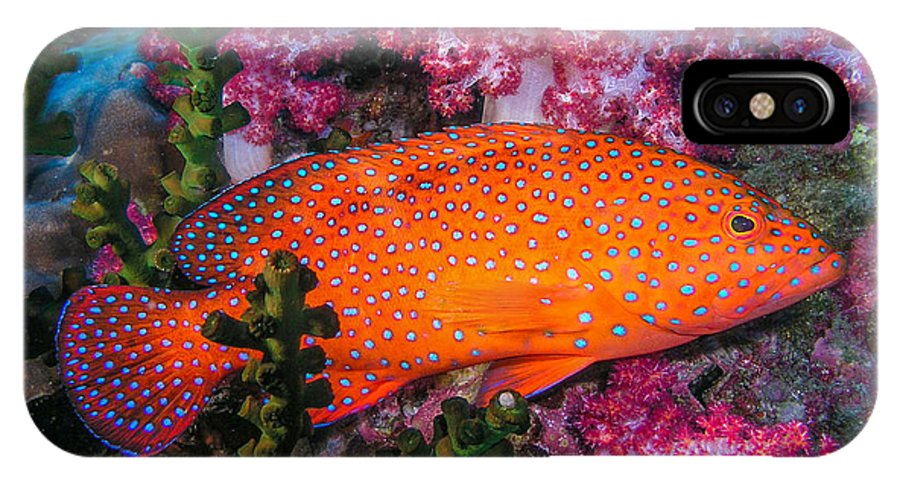 Coral Trout IPhone X Case featuring the photograph Coral Trout In Similan Islands by Roy Bendell