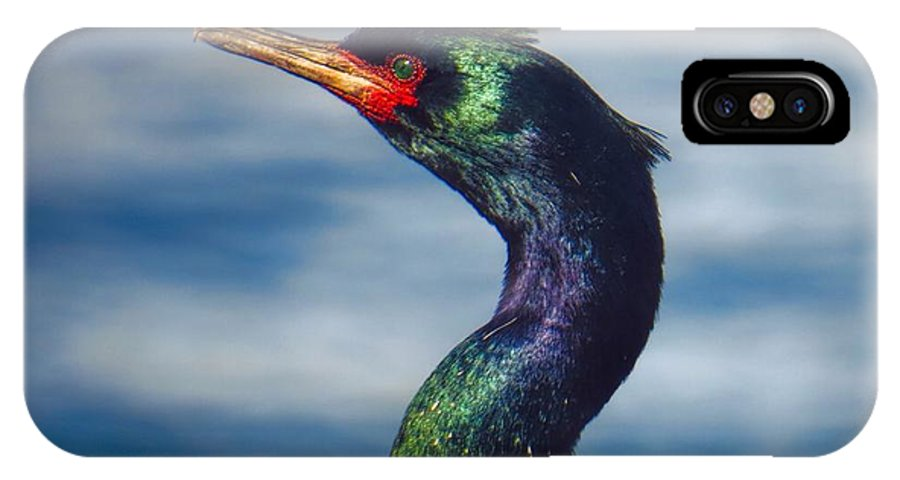 Bird IPhone X Case featuring the photograph Cormorant In The Sun by Rick Lawler