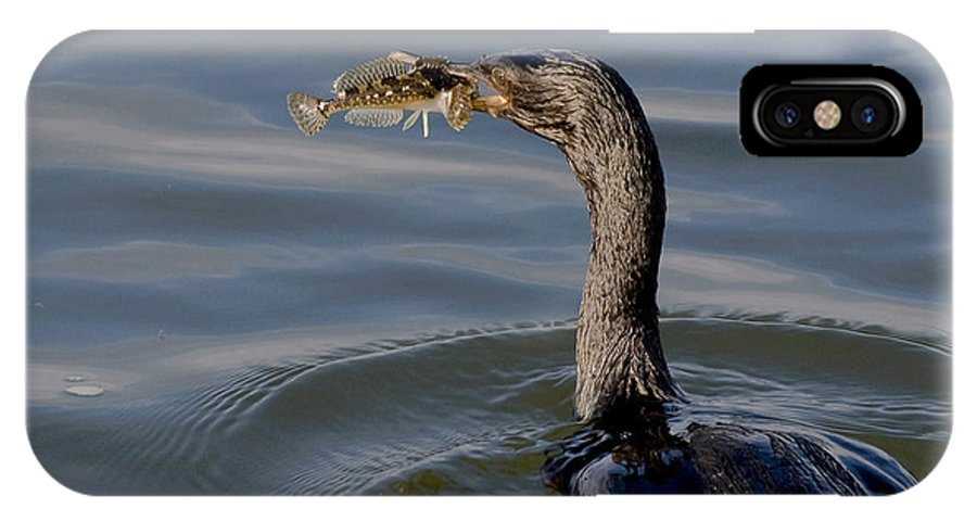 Cormorant IPhone X Case featuring the photograph Cormorant With Fish by Betty Depee