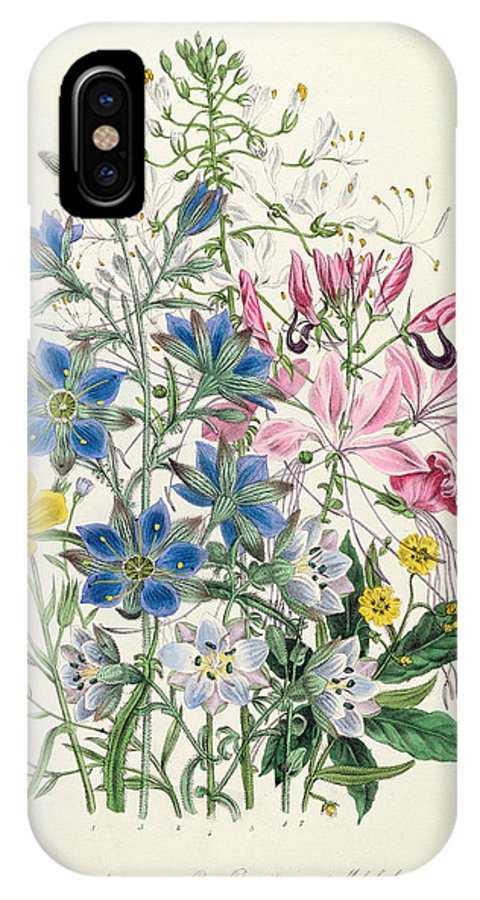Flowers IPhone X Case featuring the painting Cornflower by Jane Loudon