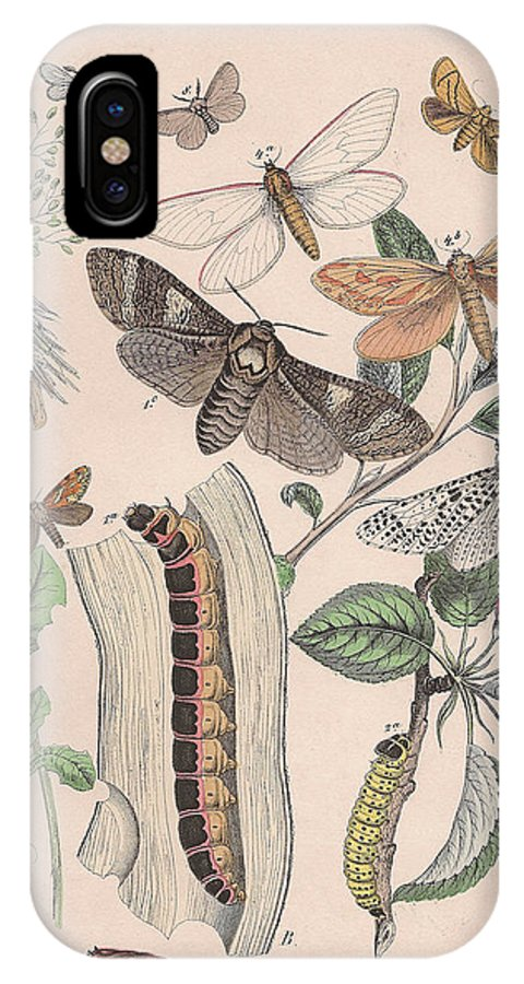 Butterfly IPhone X Case featuring the drawing Cossidae - Cochliopodidae - Hepialidae - Psychidae by W Kirby