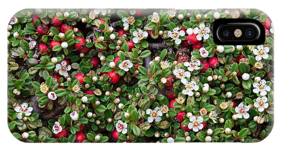 Cotoneaster IPhone X Case featuring the photograph Cotoneaster Bush Background by Andrea Casali