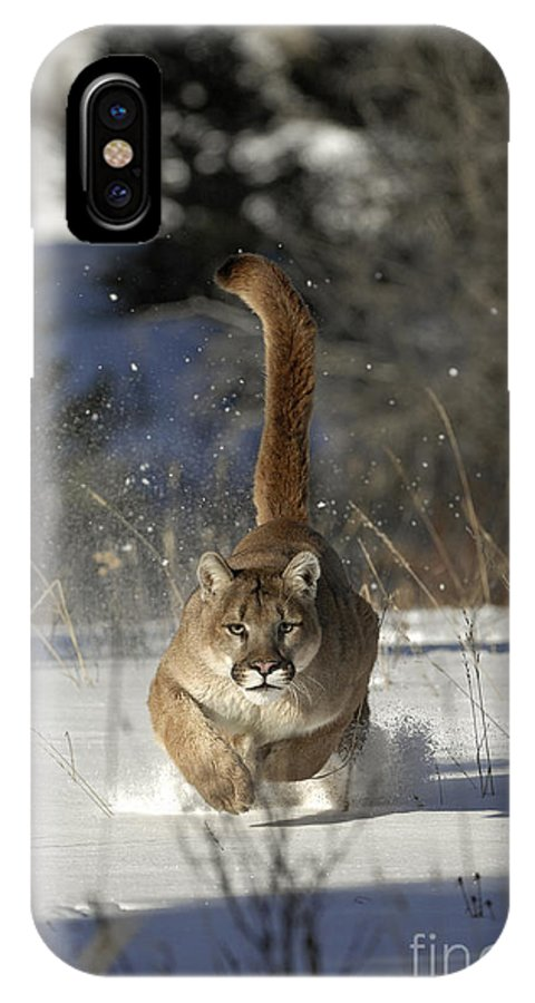 Mountain Lion IPhone X / XS Case featuring the photograph Countdown by Wildlife Fine Art