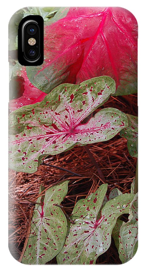 Caladium IPhone X Case featuring the photograph Courtyard Caladium by Suzanne Gaff