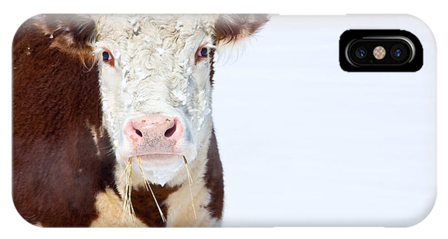 Cow IPhone X Case featuring the photograph Cow - Fine Art Photography Print by James BO Insogna