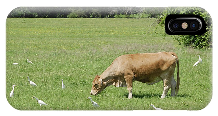 Cow IPhone X Case featuring the photograph Cow Grazing With Egret by Charles Beeler