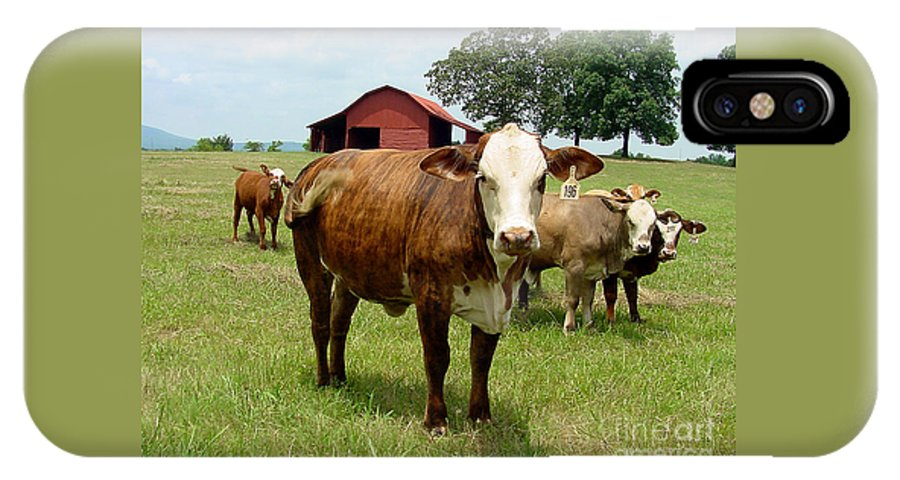 Cow IPhone X Case featuring the photograph Cows8945 by Gary Gingrich Galleries