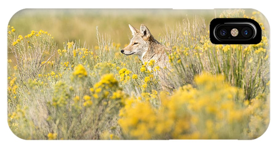 Coyote IPhone X Case featuring the photograph Coyote In The Chamisa by Deby Dixon
