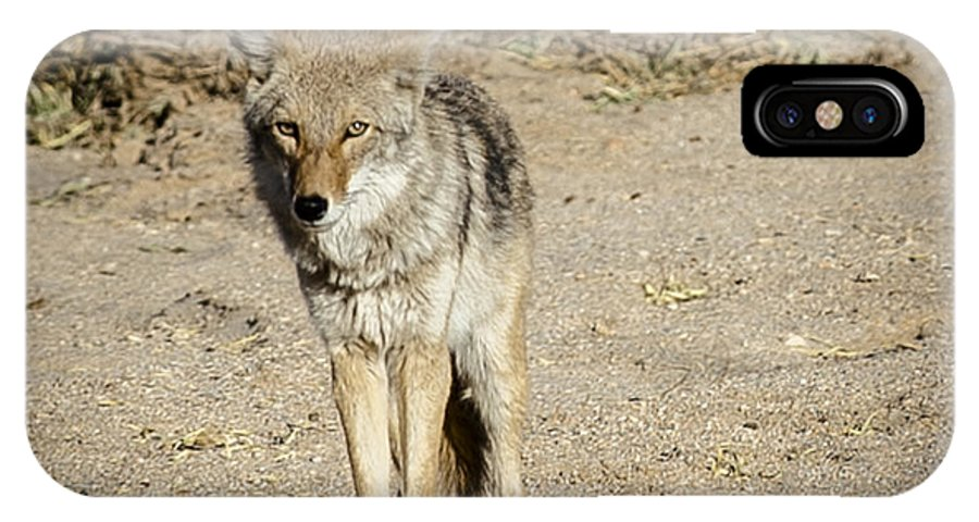 IPhone X / XS Case featuring the photograph Coyote by Robert Alexander