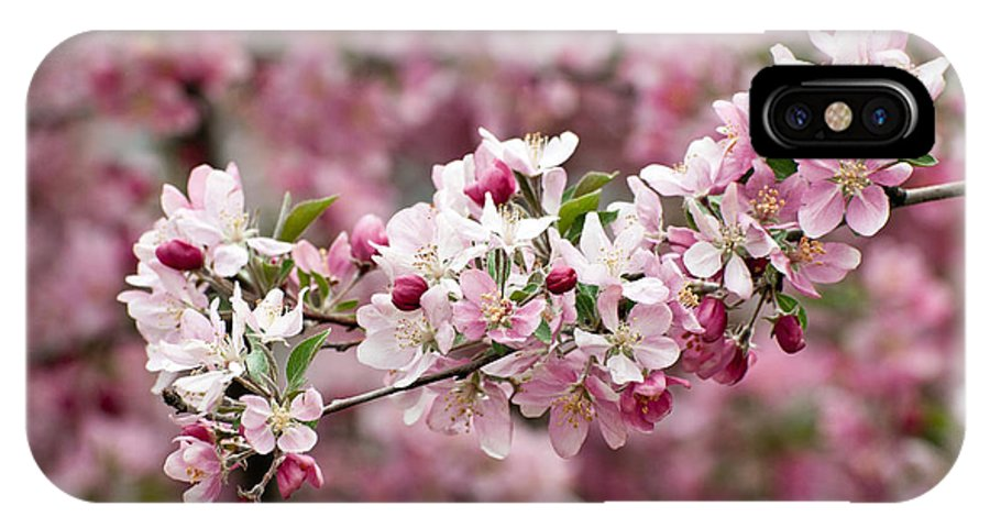 Crab Apple Blossom IPhone X Case featuring the photograph Crab Apple Blossom by Robert VanDerWal