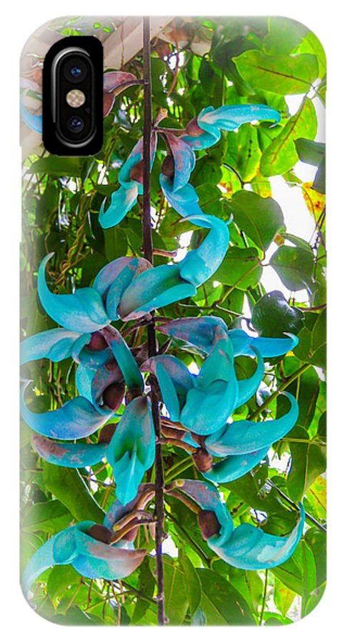 Crab Claw Vine IPhone X Case featuring the photograph Crab Claw Vine In Kula Maui by Roy Bendell