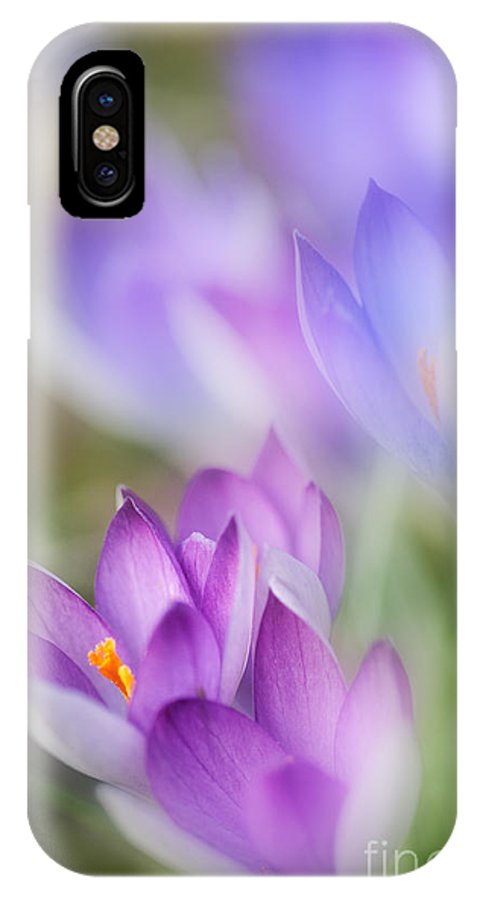 2014 IPhone X Case featuring the photograph Crocus Fantasy by Richard Burdon